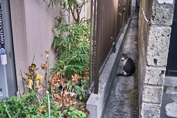 道端の猫といつか仲良くなりたい、と思ういおりん