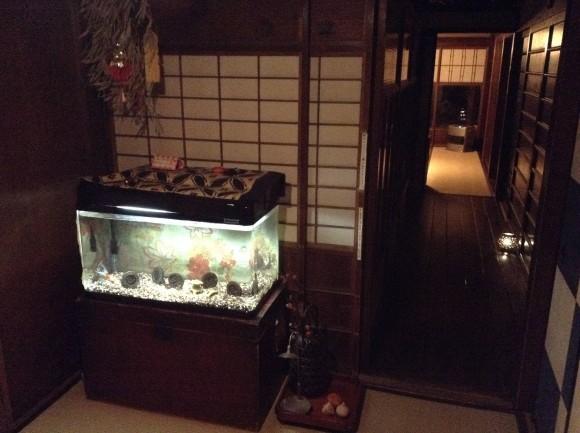 ゲストハウス「金魚屋」さん。おばあちゃん家のような雰囲気がステキ。