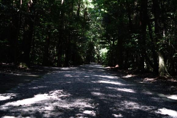 こーいう道が通勤にあったら良いよね。