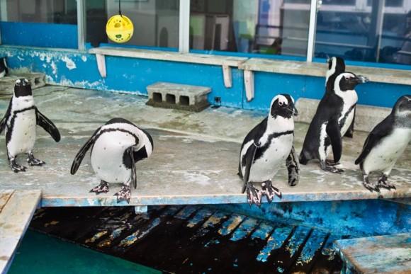 三重県には、ペンギンが超近い。というか、触れる。
