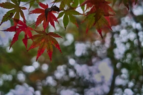 紅葉が綺麗な奈良公園。
