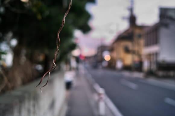 こーいうネジ巻いた枝が好き。