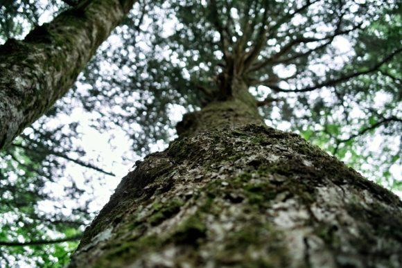 あの木のように生きたい。
