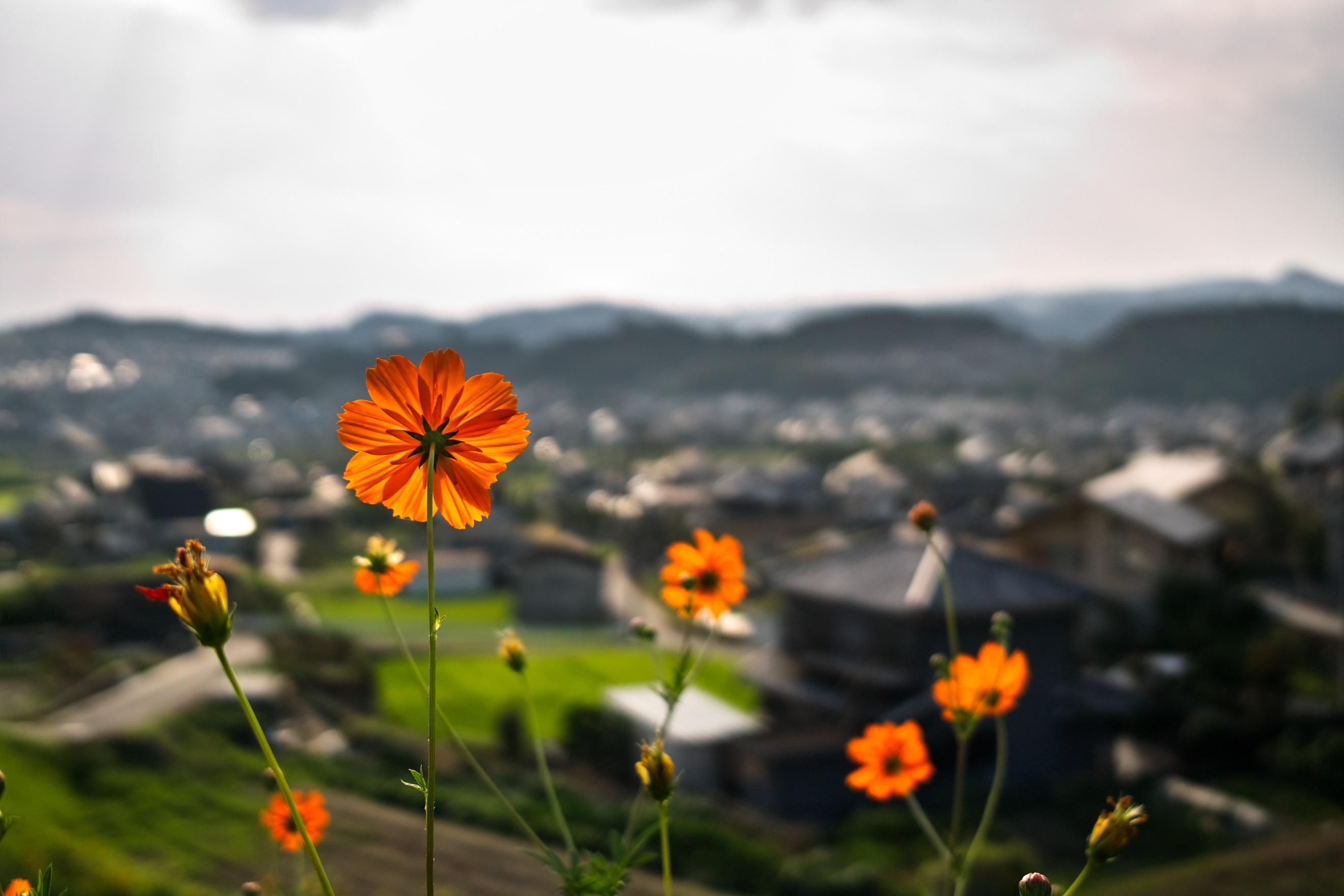 高台に咲いた野花。