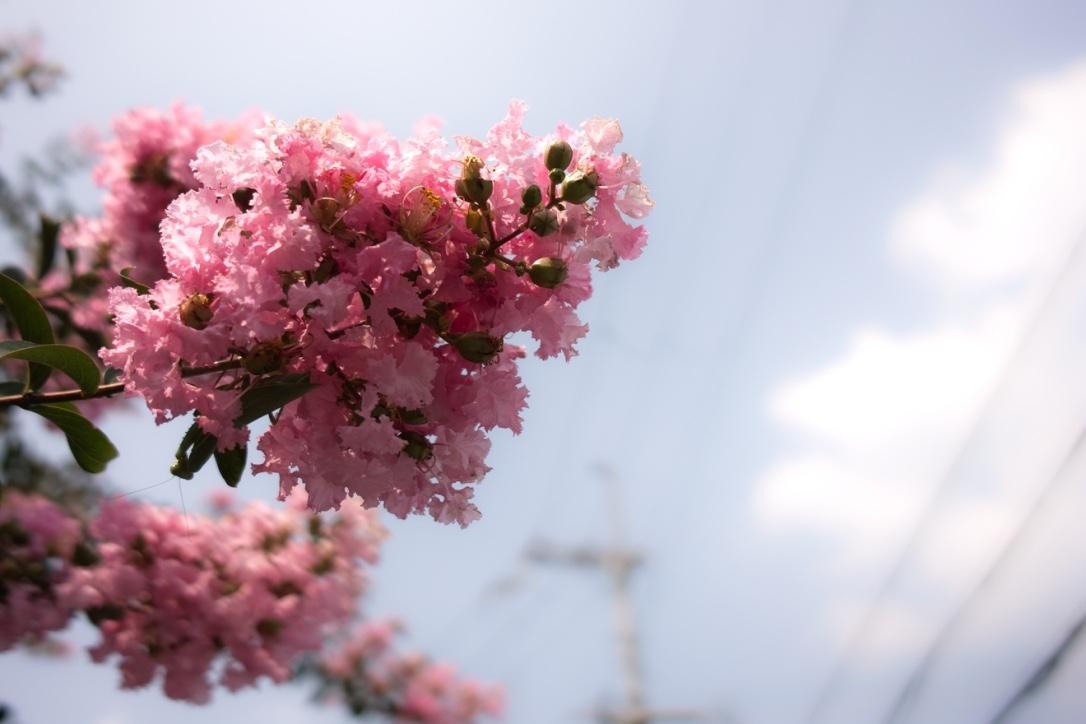 道端の花。