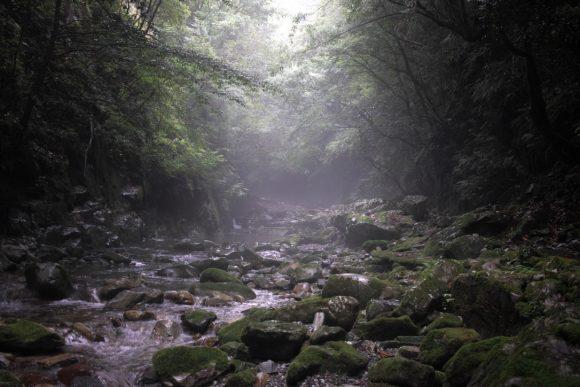 和歌山で川を登ってきました。