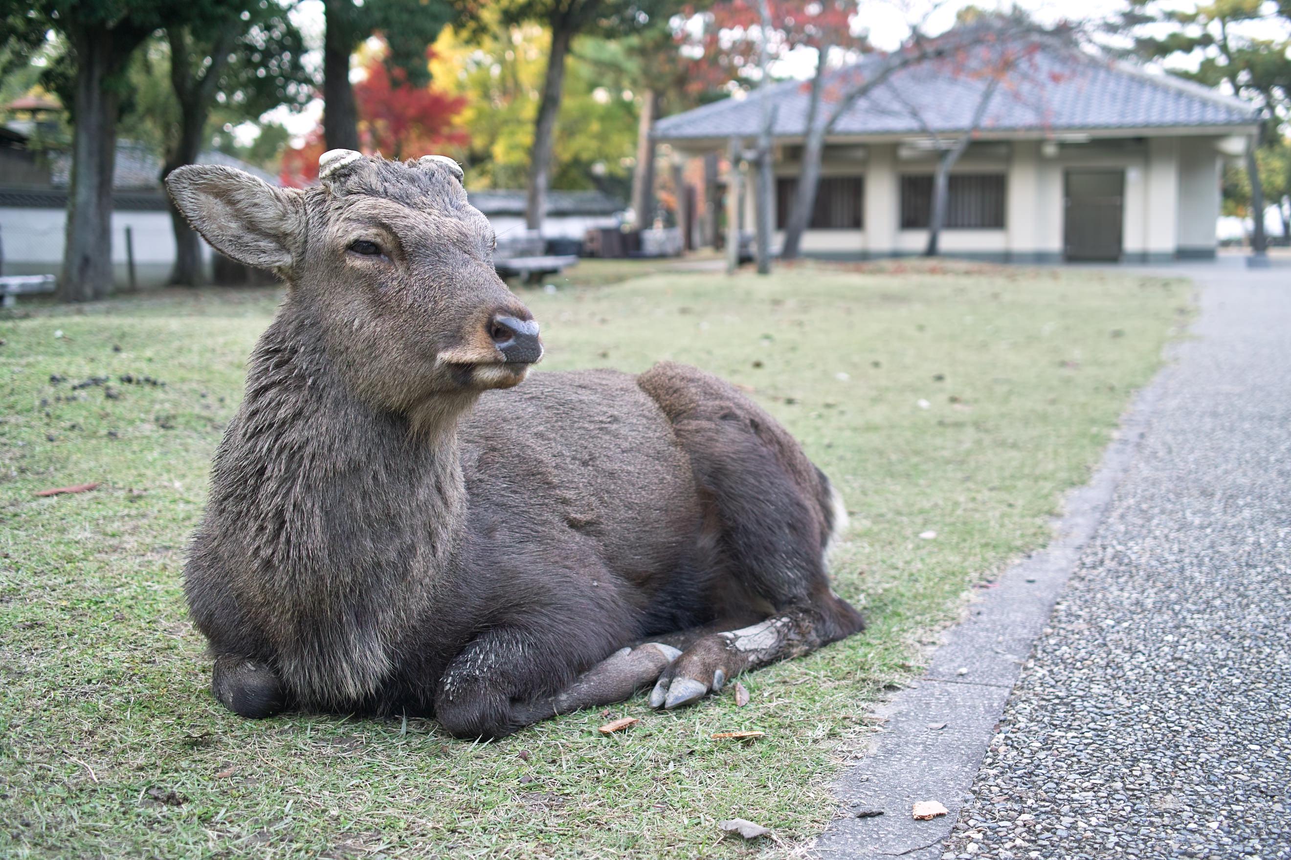 奈良はほんとにいいところ。